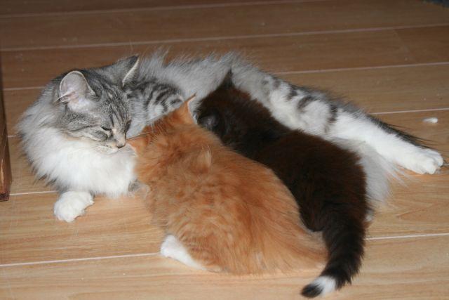 5 weken kittens